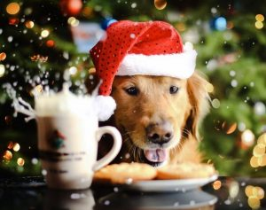 christmas-dog-wallpaper-960x759